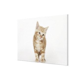 Portrait of a kitten canvas print