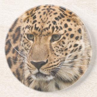 Portrait of a Leopard Coaster