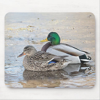 Portrait of a male and female mallard mouse pad