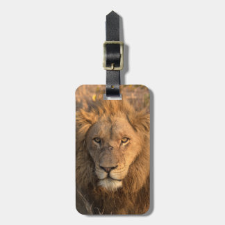 Portrait of a Male Lion Luggage Tag