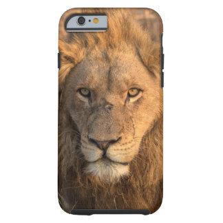 Portrait of a Male Lion Tough iPhone 6 Case