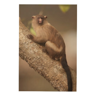 Portrait of a Marmoset Monkey Wood Wall Art
