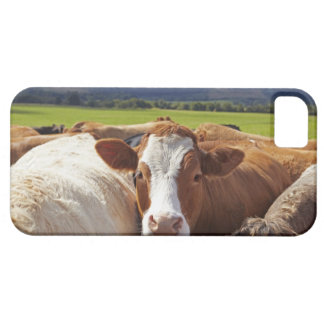Portrait of a pair of cows in field in the barely there iPhone 5 case
