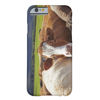 Portrait of a pair of cows in field in the barely there iPhone 6 case