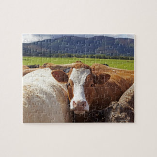 Portrait of a pair of cows in field in the jigsaw puzzle