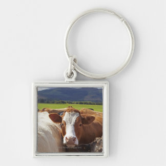 Portrait of a pair of cows in field in the key ring