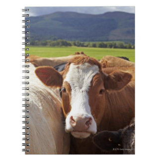 Portrait of a pair of cows in field in the notebook