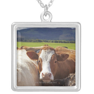 Portrait of a pair of cows in field in the silver plated necklace