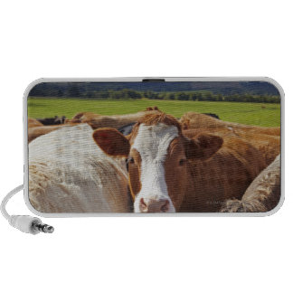 Portrait of a pair of cows in field in the speaker system
