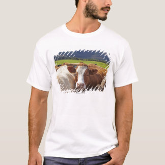 Portrait of a pair of cows in field in the T-Shirt
