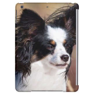 Portrait Of A Papillon Sitting In The Wind