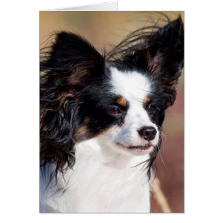 Portrait Of A Papillon Sitting In The Wind Card