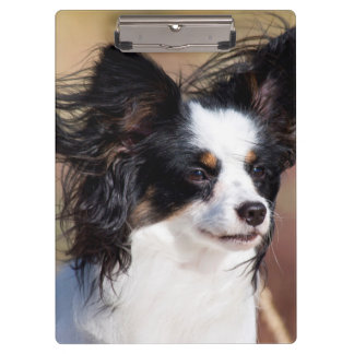 Portrait Of A Papillon Sitting In The Wind Clipboard
