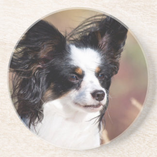 Portrait Of A Papillon Sitting In The Wind Coaster