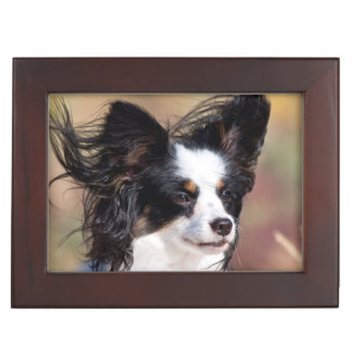 Portrait Of A Papillon Sitting In The Wind Keepsake Box