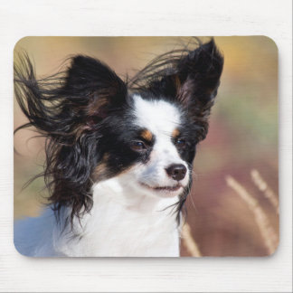 Portrait Of A Papillon Sitting In The Wind Mouse Mat