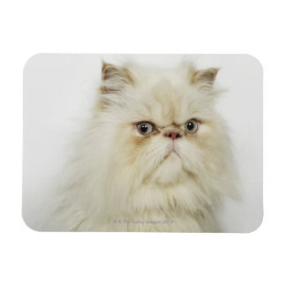 Portrait of a Persian cat Rectangular Magnet