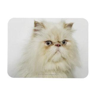 Portrait of a Persian cat Rectangular Photo Magnet
