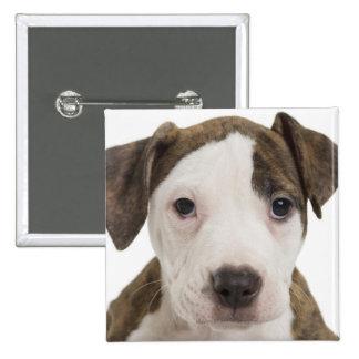 Portrait of a pitbull puppy 15 cm square badge