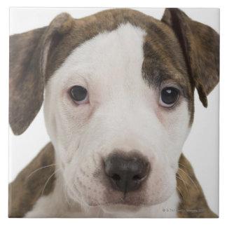 Portrait of a pitbull puppy tile
