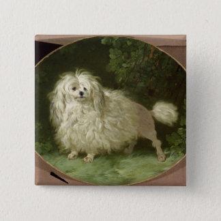 Portrait of a Poodle 15 Cm Square Badge