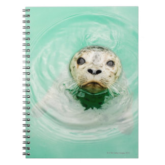 Portrait of a seal in water notebook