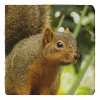Portrait of a Squirrel Nature Animal Photography Trivet