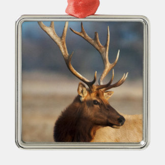 Portrait of a stunning bull elk Silver-Colored square decoration