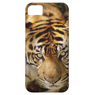 Portrait of a tiger iPhone 5 cover