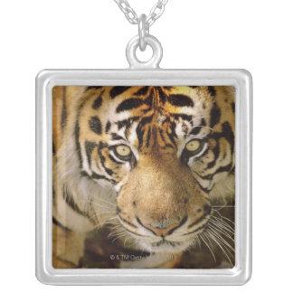Portrait of a tiger jewelry