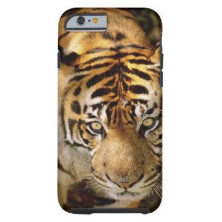 Portrait of a tiger tough iPhone 6 case