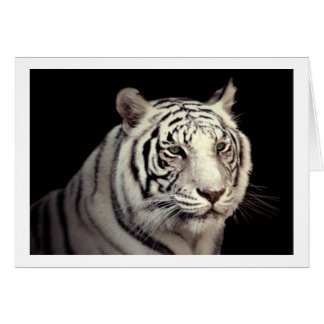 Portrait of a White Bengal Tiger Card