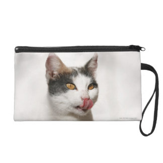 Portrait of a white cat licking wristlet