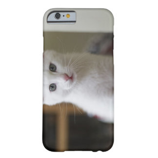 Portrait of a white kitten, Sweden. Barely There iPhone 6 Case