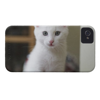 Portrait of a white kitten, Sweden. iPhone 4 Cases