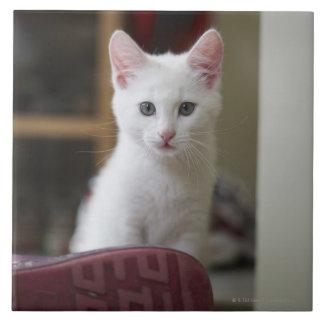 Portrait of a white kitten, Sweden. Tile