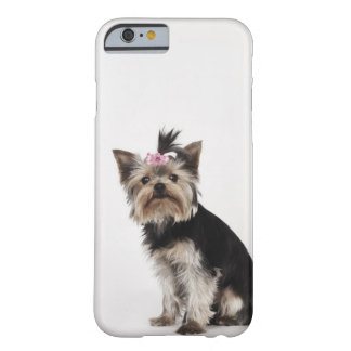 Portrait of a Yorkshire Terrier dog Barely There iPhone 6 Case