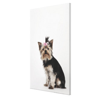 Portrait of a Yorkshire Terrier dog Canvas Print