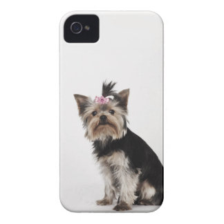Portrait of a Yorkshire Terrier dog Case-Mate iPhone 4 Cases