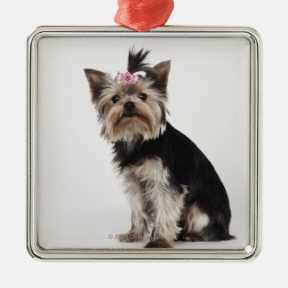 Portrait of a Yorkshire Terrier dog Christmas Ornament