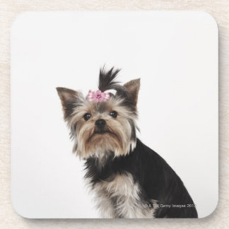 Portrait of a Yorkshire Terrier dog Coaster