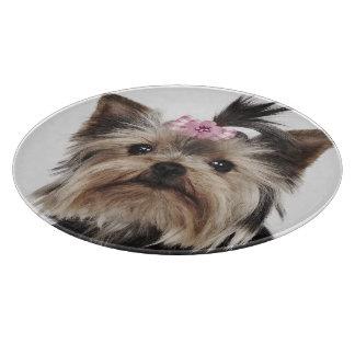 Portrait of a Yorkshire Terrier dog Cutting Board