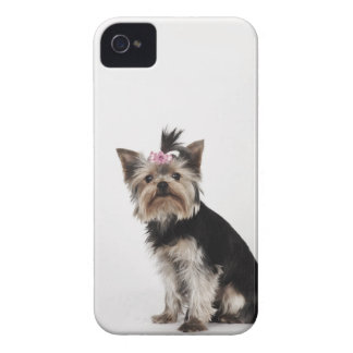 Portrait of a Yorkshire Terrier dog iPhone 4 Case-Mate Cases