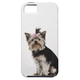 Portrait of a Yorkshire Terrier dog iPhone 5 Cases