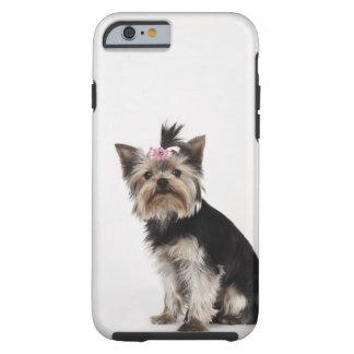 Portrait of a Yorkshire Terrier dog Tough iPhone 6 Case