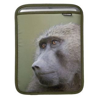 Portrait of adult Olive baboon (Papio anubis) iPad Sleeve