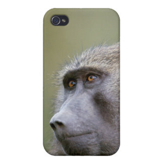 Portrait of adult Olive baboon (Papio anubis) iPhone 4/4S Cover