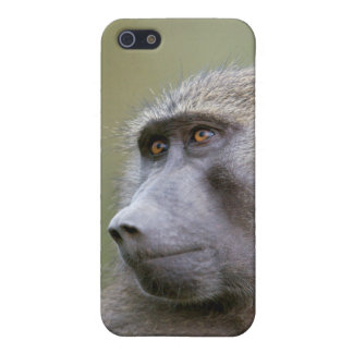 Portrait of adult Olive baboon (Papio anubis) iPhone 5/5S Covers