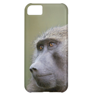 Portrait of adult Olive baboon (Papio anubis) iPhone 5C Case