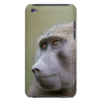 Portrait of adult Olive baboon (Papio anubis) iPod Touch Case-Mate Case